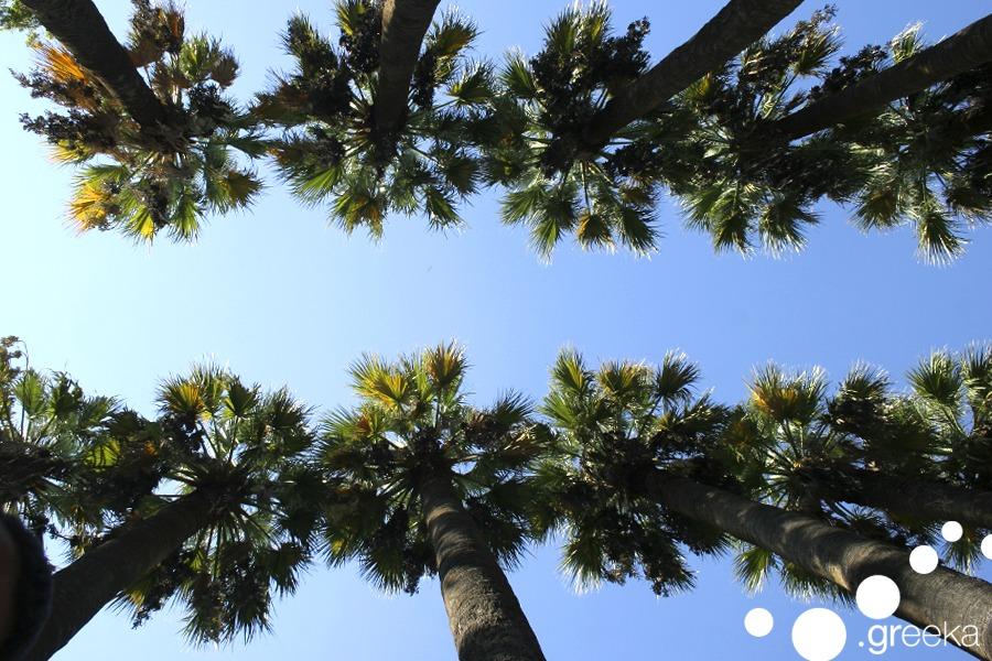 Pine Trees Ethnikos Kipos