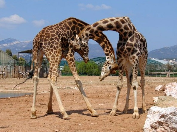 Fun in Athens: Visit the Attica Zoo