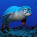 greece-marine-animals